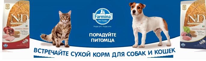Корм для собак Монж (Monge) - отзывы и советы ветеринаров