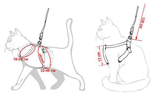 Как сделать шлейку для кошки своими руками в домашних 576